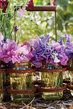 Cut pink and purple sweet peas in canning jars