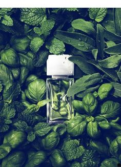 Mint & Basilic // Unknown perfume but the photoshoot is amazing. I can even feel the smell of grass and mint. It should be very soft and fresh.