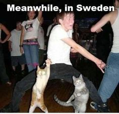 Meanwhile in sweeden ! :D