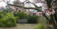 Lawn to Garden | A comprehensive guide to the sheet mulch process | Alameda County, California