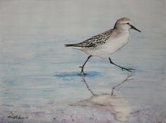 "Art by Charlotte Yealey: ""Sand Piper Shore Bird"" Watercolor by Charlotte Yealey"