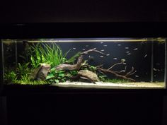 Low Tech Tank Show-and-Tell (low tech can be lush, too! =) - Page 48 - The Planted Tank Forum