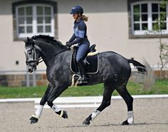 """The """"familiarization phase"""" is a technical term that incorporates the first three abilities of the horse's Training Scale: rhythm, suppleness and contact. For the education of a young horse, this is Cute Horses, Pretty Horses, Horse Love, Beautiful Horses, Dressage Horses, Draft Horses, English Riding, Equestrian Outfits, Horse Training"""