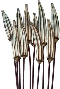 OKRA PODS - Natural - Stemmed - 3 x 8 | Dried Flowers R Us