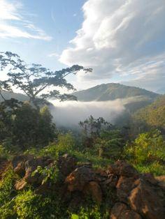 Bwindi Impenetrable National Park, Uganda, on a misty morning.