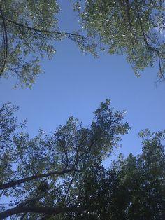 árboles y cielo en el parque