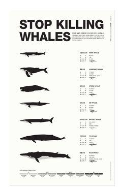 Stop killing whales 세계멸종위기 고래 종에 관한 인포그래픽    Source - www.slowalk.co.kr