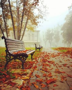 Park benches in Belgrade, Serbia By Milos Plavsic