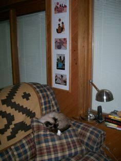 Lacey Rosen snoozing in The Man Cave / April 2012