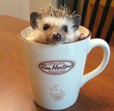 How cute is this tea-loving hedgehog?