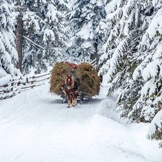 Winter is coming…but unlike Game of Thrones, it brings holidays & joy. Winter in Romania can have many faces. I Love Winter, Winter Light, Special Pictures, Winter Pictures, Winter Goddess, Visit Romania, Carpathian Mountains, Winter Wallpaper, Winter Scenery