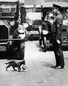 A policeman in New York City stops traffic just for a cat to carry its kittens across the street, 1925