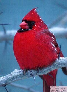 A Real Life Angry Bird ♥