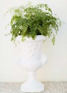 Ako ste već izgubili nadu da će svaka biljka koju unesete u kuću preživjeti zimu, nemojte se predavati. Na vašu sreću, postoje biljke koje ne traže mnogo znanja niti pažnje te mogu preživjeti skoro…