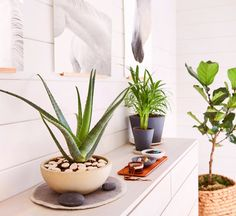 Think you don't have a green thumb? Think again.