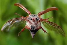 Полет майского жука