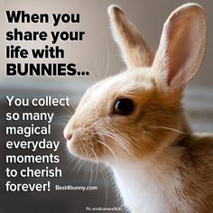 Magical everyday moments... Bunnies give us so many! www.best4bunny.com