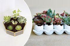 10 DIY Ways to Display Succulents