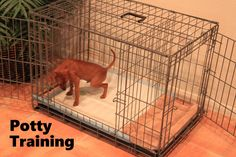 Potty Training a Puppy? We have a Fast & Easy solution! Over 40,000 dogs have been successfully potty trained with our system. Works as Fast as 3 days! Click on this link to watch our FREE world-famous potty training video: ModernPuppies.com