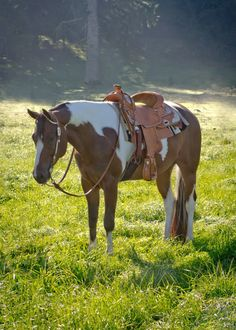Lovely Bay Tobiano APHA Gelding (c) Magic Look Photography