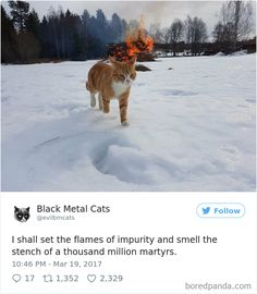 Twitter Account Pairs Cat Pics With Metal Lyrics And It's Just Perfect