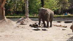 Afrykanarium i Zoo - Wrocław