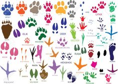 5321503-Vector-paw-prints-of-animals-and-birds-Stock-Vector-paw-tattoo-print.jpg (1300×930)