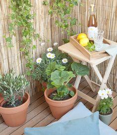 #balcony #plants | Dille & Kamille