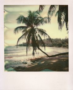 dreaming of palm trees and beaches