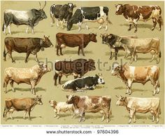 Cow 写真素材・ベクター・画像・イラスト | Shutterstock