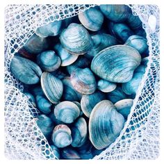 """""""We wish we could collect all the seashells on the beach #seashells #inspiration #shadesofblue"""""""