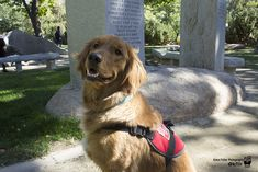 Kendall's service dog, Watson, has helped her through many migraines and is her constant companion