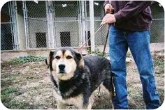 ILLINOIS ~ meet  Sonny Boy. I am 8 years old and in great shape for my age. I love female dogs and people once I get to know you. I am shy and distant at first but once I know you I am a wonderful dog. I am well trained and ready to go to my new home. I have been living at the shelter for the past 7 years so I am ready for my new home. PLEASE come VISIT me <3 HENRY COUNTY HUMANE SOCIETY 197 FISHER AVE. KEWANEE, IL 61443 p (309) 852-0040 henrycountyhsk@insightbb.com