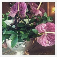 #CamilaRaznovich Camila Raznovich: Buongiorno, ditelo con un fiore...#currentmood #goodmorning #love #lifeinthecountryside #sundaymorning