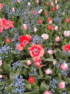 Giverny - Jardins de Monet