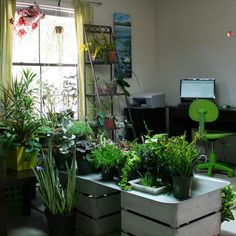 Indoor plants for the office....4