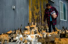 If you've not yet heard about Japan's famous 'Cat Island', then you're in for a treat. The remote Aoshima island in southern Japan's Ehime prefectur. Ehime, Cat Island Japan, Neko, Chat Web, Cat Empire, Cat Heaven, Egyptian Mau, Japanese Cat, Matou