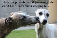 The Most Powerful Anti-Depressant In The World Has 4 Paws And A Wagging Tail