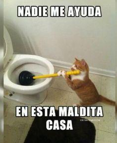 "Pobre gato :""v"