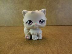 #263 Persian Cat 2004