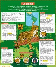 Animal Science, Science Biology, Science Projects For Kids, Science For Kids, Jaguar Habitat, Zoo Project, Medical Mnemonics, Study French, French Education