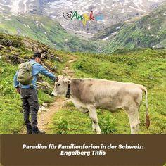 Die Region Engelberg-Titlis ist die grösste Winter und Sommer Feriendestination der Zentralschweiz. Sie ist ein Familienparadies mit einer perfekten Infrastruktur sowie coolen Erlebnissen und Familienaktivitäten, die einen Aufenthalt zum unvergesslichen Erlebnis machen. Um das breite Angebot auskosten zu können, plant ihr mit Vorteil zwei bis drei Tage für einen Kurzaufenthalt ein oder aber noch besser: ihr macht gleich Familienferien in Engelberg! #Familienferien #Schweiz #Titlis… Engelberg, Cute, Animals, Sister Love, Family Getaways, Playground, Campsite, Road Trip Destinations, Animales