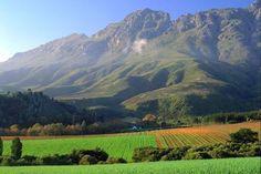 Wine Vineyards - Stellenbosch, South Africa