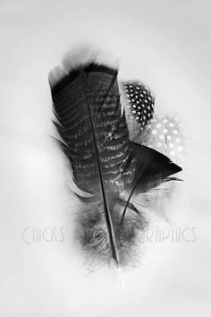 Black & White Feathers Photo Print by ChicksPhotoGraphics on Etsy