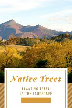 Sometimes gardeners learn the hard way. We grow trees we are familiar with or like the best. But gardening with natives is preferred, and here's why. Mystic Mountain, Landscape Design Plans, Blue Spruce, Big Backyard, How To Speak French, Basque Country, New Growth, The Hard Way, Growing Tree