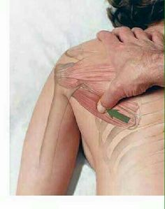 Shiatsu Massage – A Worldwide Popular Acupressure Treatment - Acupuncture Hut Massage Tips, Massage Therapy, Massage Wellness, Wellness Spa, Spa Massage, Pilates, Reflexology Massage, Sports Massage, Alternative Medicine
