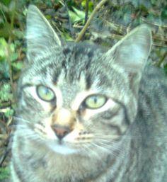Un appello urgente: Missing Two Beautiful Cats! - Inchiostro Fresco