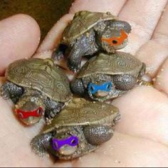 Baby Mutant Ninja Turtles, quite possibly the cutest thing ever!