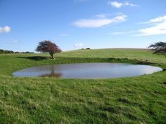 """I should like it of all things,"" said Stephen. ""Whatever the advertisements may say, it is a chalk soil, and there are some very curious plants and beetles on the downs. I am with child to see a dew-pond."" --Post Captain, Chapter 1. // Photo of a dew pond on the Sussex Downs near Lewes."