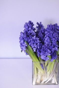 .#luv #blue #spring here have many flowers for gift.So order from here free delivery 100% satisfied grantee.. http://purplerose.ca/